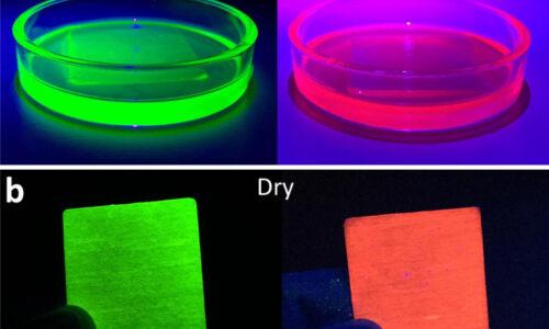 Luminescencyjne drewno zastąpi żarówki?