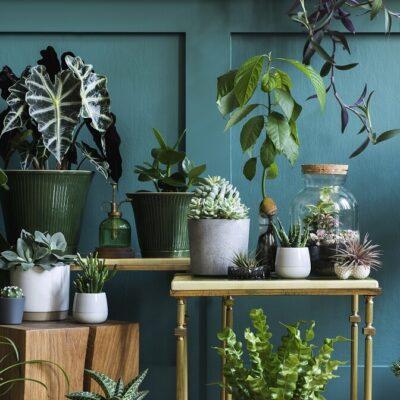 Zadbaj o rośliny we wnętrzach