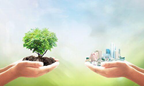 70 tysięcy drzew na 70 lat Grupy Kęty