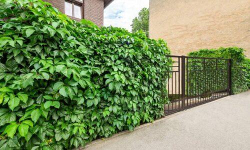 Zielone ogrodzenia